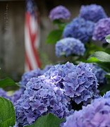 Anne Babineau Metal Prints - Hydrangeas And Old Glory Metal Print by Anne Babineau