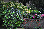 Impatiens Posters - Hydrangeas Salzburg Poster by Mary Machare
