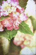Vase Of Flowers Posters - Hydrangeas Poster by Stephanie Frey