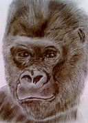 Primate Drawings - I am King by Diane Leuzzi