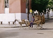Horse And Cart Photos - I Am My Own Boss by John Malone