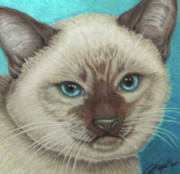Cats Drawings Originals - I Am Siamese If You Please by Beverly Fuqua