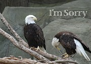 I Am Sorry Print by Michael Peychich