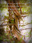 Entangled Photos - I AM the Vine John 15 by Cindy Wright