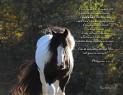Gypsy Vanner Horse Framed Prints - I Can Do All Things Framed Print by Terry Kirkland Cook
