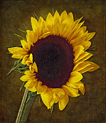 Sunflower Prints - I Dance With The Sun Print by Susan Candelario