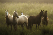 Grass Metal Prints - I Dreamed of Horses Metal Print by Ron  McGinnis