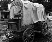 Covered Wagon Posters - I got you covered Poster by Ted Petrovits