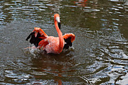 Flamingo Gardens Photography - I Had Enough by Carmen Del Valle