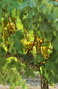 Grapes Digital Art Prints - I Heard It On The Grapevine Print by Patricia Stalter