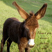 Donkeys Framed Prints - I Heard You Werent Feeling Well Framed Print by Jan Amiss Photography