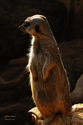 Meerkat Digital Art Prints - I keep my eye on YOU Print by Isaac Richter