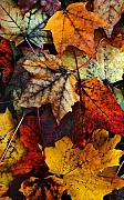 Fall Leaves Digital Art Prints - I Love Fall 2 Print by Joanne Coyle