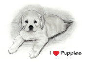 Puppies Drawings Posters - I Love Puppies Golden Retriever Poster by Joyce Geleynse