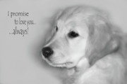 Retriever Digital Art Prints - I Promise to Love You Always Print by Cathy  Beharriell