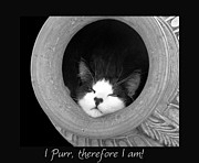 Cat Nap Prints - I Purr therefore I am... Print by Karen Lewis