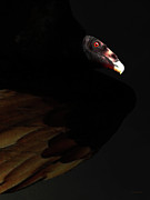 Wing Tong Digital Art - I Saw The Vulture in My Dreams Again by Wingsdomain Art and Photography