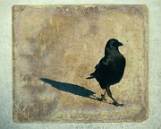 Corvidae Prints - I Walk Alone Print by Gothicolors And Crows