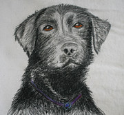 Labrador Retriever Pastels - I want to play by Jose Valeriano