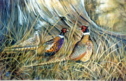 Pheasant Pastels Framed Prints - I Was Here First Framed Print by Lynne Parker