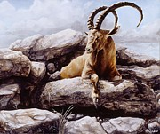Mountain Goat Painting Prints - Ibex Print by Steve Goad