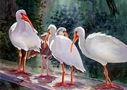 Flocks Painting Framed Prints - Ibis - Youngster Among Us. Framed Print by Roxanne Tobaison