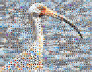 Contemporary Heart Collage Digital Art - Ibis by Boy Sees Hearts