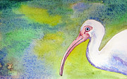 Ibis Drawings Metal Prints - Ibis Metal Print by Tina McCurdy
