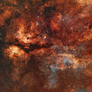 Cosmic Posters - Ic 1318 And The Butterfly Nebula Poster by Rolf Geissinger