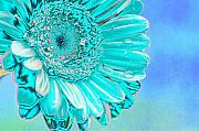 Daisy Prints - Ice blue Print by Carol Lynch