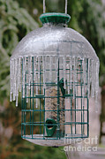 Ice Storm Photos - Ice-coated Birdfeeder by Ted Kinsman