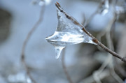 Nature Icicle Prints - Ice Drop Print by Glenn Gordon