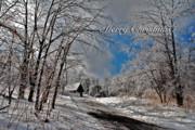 Ice Storm Christmas Card Print by Lois Bryan