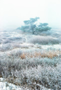Wintry Photo Prints - Ice Tree Shenandoah National Park Print by Thomas R Fletcher
