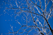 Winter Storm Posters - Ice Tree Poster by Susan Yates