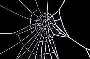 Black Spider Prints - Ice web Print by Carol Lynch