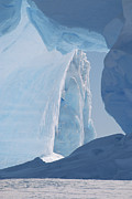 Antarctic Ocean Prints - Icebergs Caught In Frozen Ice Shelf Print by Konrad Wothe
