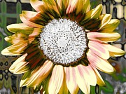 Iced Oatmeal Cookie Sunflower Print by Devalyn Marshall