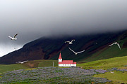 Flying Seagull Framed Prints - Icelandic Country Church With Gulls Framed Print by photo by Bob Travis