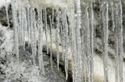 Icicles Prints - Icicle Forest Print by Valerie Rakes