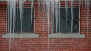 Bitter Prints - Icicles 2 - In Front of Windows Off Red Brick Bldg. Print by Steve Ohlsen