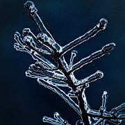 2012 Digital Art Prints - Icy Branch Print by David Patterson