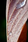 Autumn Leaf Photos - Icy Fall Morning by Lisa Knechtel