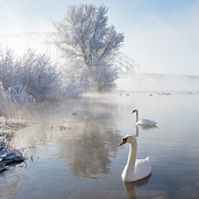 Square Tapestries Textiles - Icy Swan Lake by E.M. van Nuil
