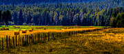 Yellow Line Prints - Idaho Hay Bales  Print by David Patterson