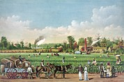 Slavery Prints - Idealized View Of Cotton Plantation Print by Everett