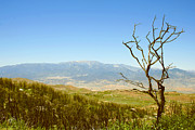 Grass - Idyllwild Mountain View With Dead Tree by Ben and Raisa Gertsberg