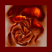 Photomanipulation Originals - If a rose is a rose by Li   van Saathoff