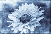 Christine Annas Metal Prints - If Daisies Wore Blue Jeans Metal Print by Christine Annas