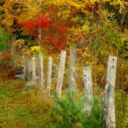 Country Scene Prints - If I Could Paint No 1 - New England Fall fence Print by Jon Holiday